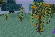 OrangeTrees