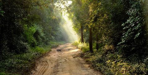 Jungle-road.jpg