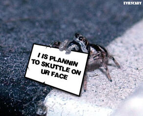 Spidercute.jpg