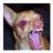 MangoTheHusky's avatar