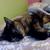 Catlover101123