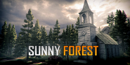 Sunny-forest