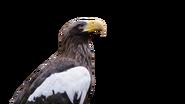 Eagle-no-background