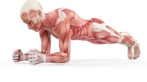 Planks (exercise)