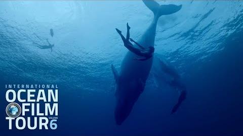 International_OCEAN_FILM_TOUR_Volume_6_Official_Trailer-0
