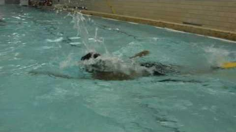 SDA17_-_Swim_&_Water_Polo_-_Elliott_over_and_back