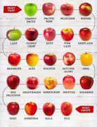 Apples-range-of-names-and-tartness
