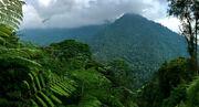 Tangredi Jungle.jpg
