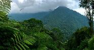 Tangredi Jungle