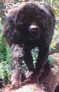 Baboon (After Earth)