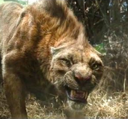 Ferus Tiger