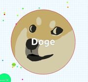 Dogeeee.jpg