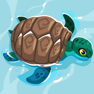 Island Sea Turtle