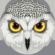 Winter white owl hi