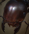 Ant queen.png