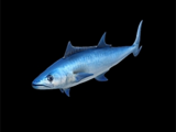 Shore Fish