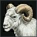 Ram (animal)