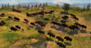 Bison great plains