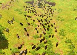 Herd bison.png