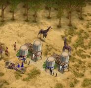 Giraffes hunted