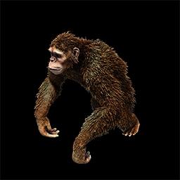 Furious the Monkey Boy