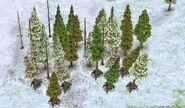 Walking Pines