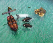 Orcas combat