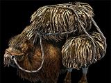 Camello Llameante