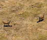 Aoe2 goat