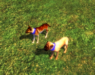 In-game Explorer Dog
