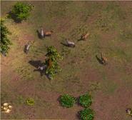 Nilgai grazing