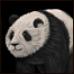 PandaAoM icon.png