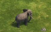 Elephant DE