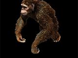 Hijo del Mono Furioso
