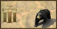 Black Bear history portrait
