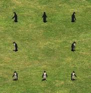 Penguingroup