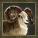 Marco Polo Sheep