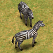 Zebra AoM