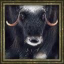 Aoe3 beta musk ox portrait