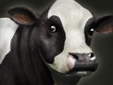 Sacred Cow