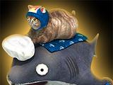 Sharkatzor