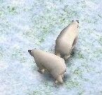 PolarBearAOM.jpg