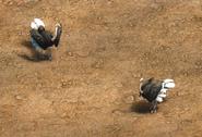 Ostrich aoe2de