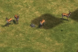 Gazelles AOE