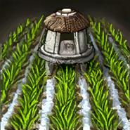 India rice paddy icon aoe3de