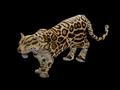 Jaguar aoe2 render