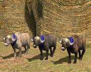 Water Buffalo variants AoE3
