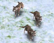 Wolves AOM