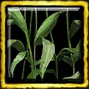 Green Corn Ceremony