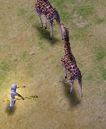 Animals of Set